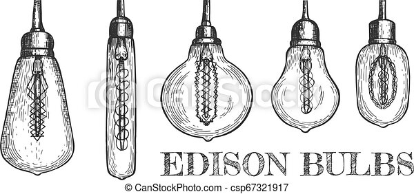 Collection of various shaped hanging edison bulbs. Vector ...
