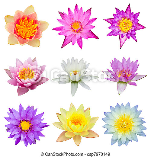 collection of water lily isolated - csp7970149
