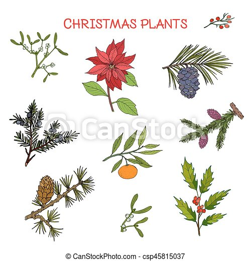 Collection Of Winter Plants Christmas Design Vector Illustration