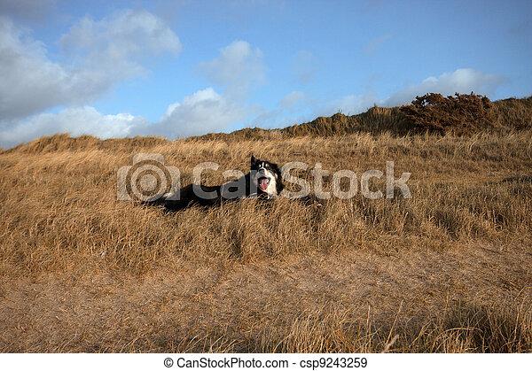 Un potro en la hierba - csp9243259