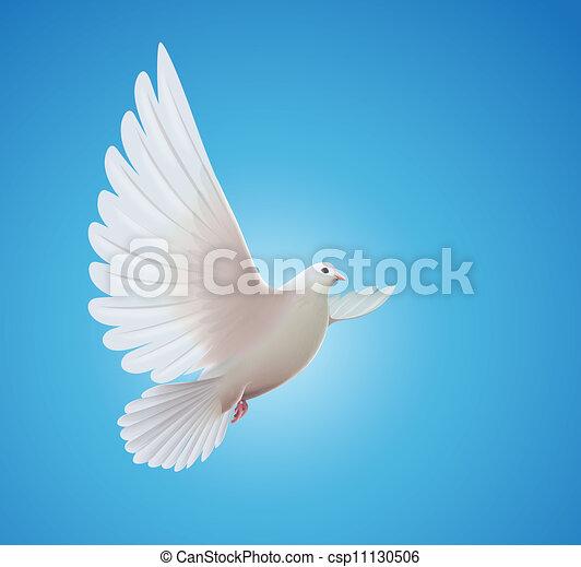 colombe blanc - csp11130506