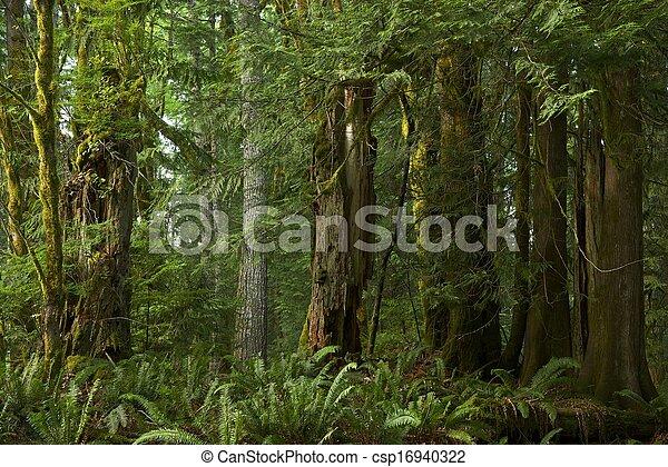 Bosque de Columbia Británica - csp16940322