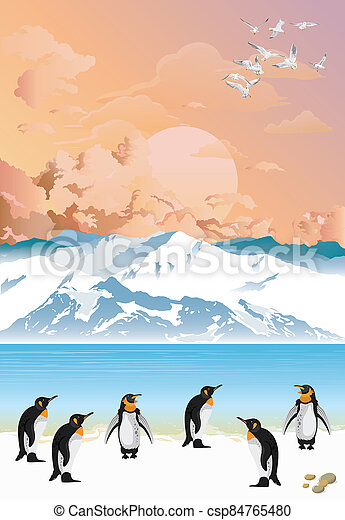 Colony of penguins at dawn - csp84765480