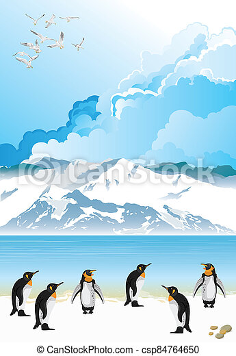 Colony of penguins - csp84764650