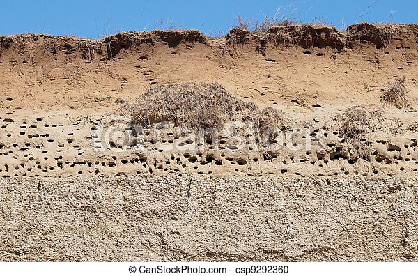 Colony of swallows, Sand Martin  - csp9292360