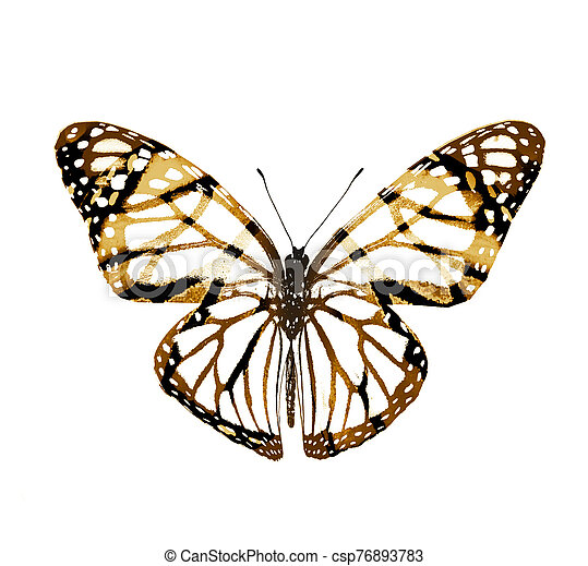 Color butterfly , isolated on white background - csp76893783