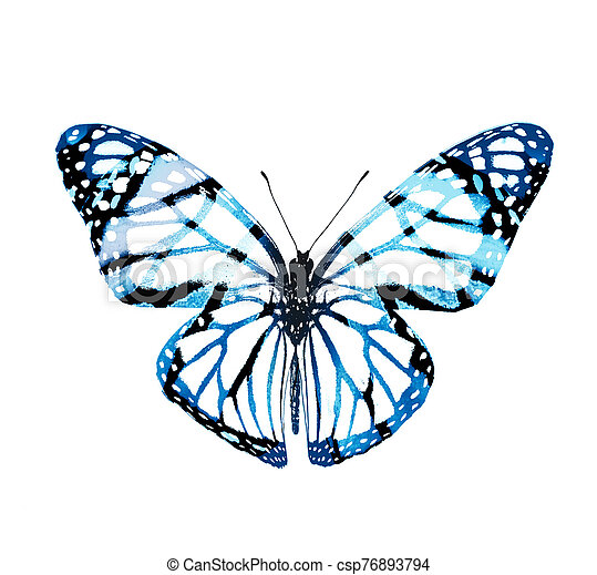 Color butterfly , isolated on white background - csp76893794
