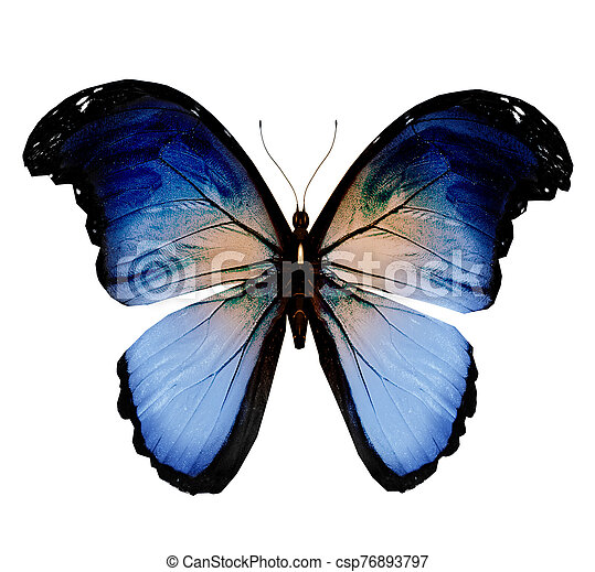 Color butterfly , isolated on white background - csp76893797