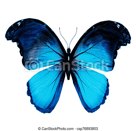 Color butterfly , isolated on white background - csp76893803