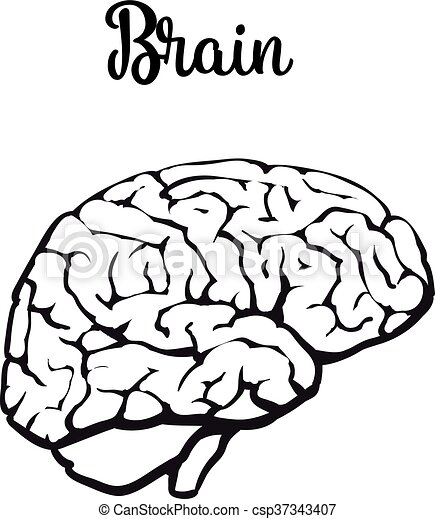 human brain vector illustration sketch of a brain isolated rh canstockphoto com brain vector art free download free brain vector art