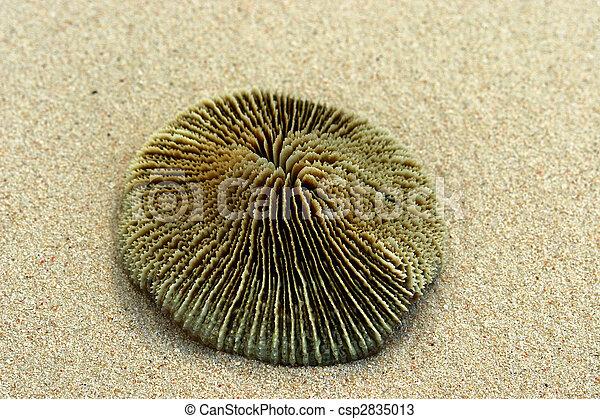 Coral redondo en el color de arena de la piel humana. - csp2835013