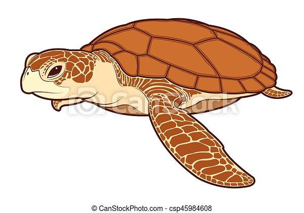 Color de tortuga, vector, mar. Tortuga, mar, cartoon., color, vector ...