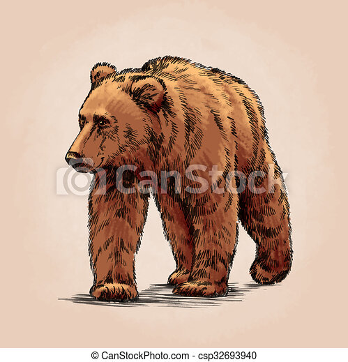 Grizzly Bear Drawing In Color Color engrave isolated...