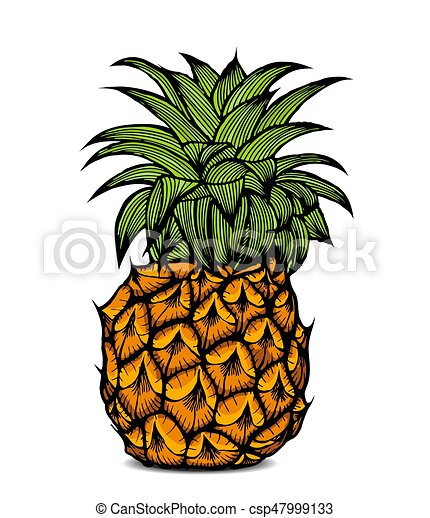 Color Fruta Pina Illustration Aislado Fruta Color Vector