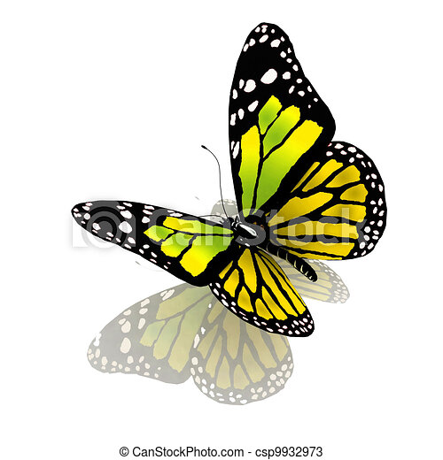 Color mariposa, verde.