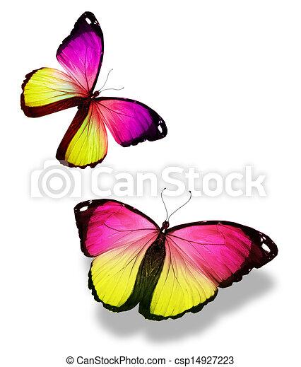 Color, mariposas, blanco, dos.