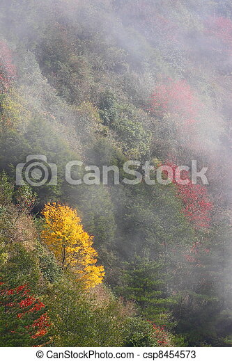 color of autumn - csp8454573