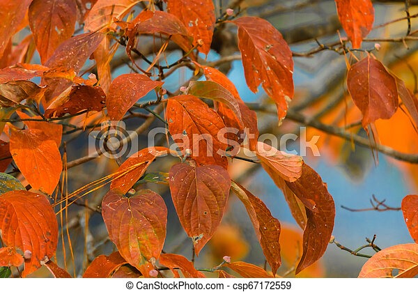 Color of Fall Leaves - csp67172559