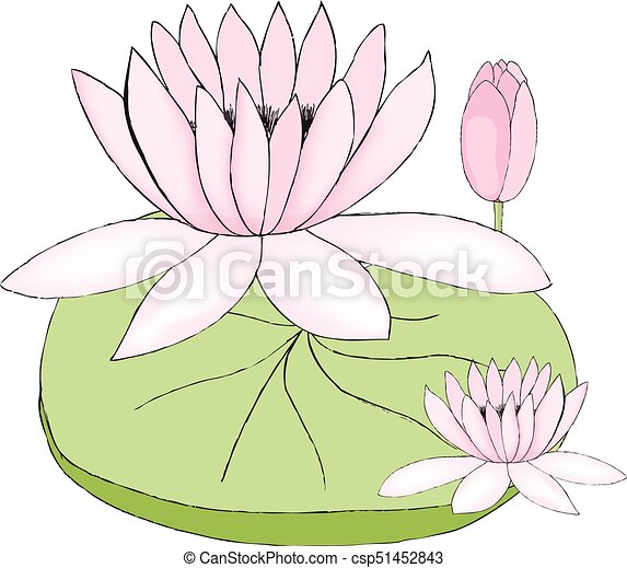 Color Vector Illustration Of Lotus Bud And Leaf On White Background