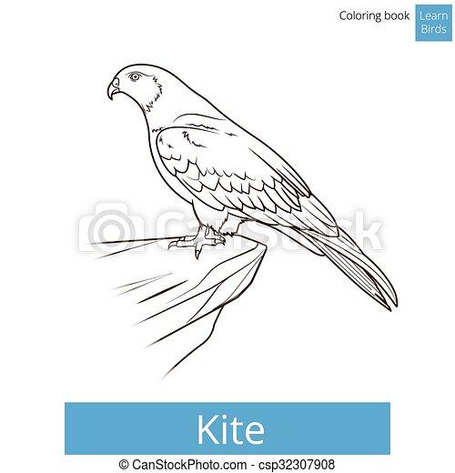 Coloration Cerf Volant Oiseau Vecteur Apprendre Oiseaux Livre