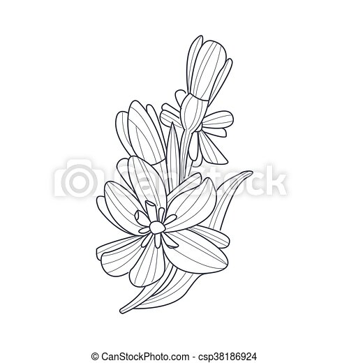 Coloration Jonquille Livre Fleur Monochrome Dessin