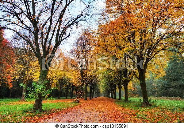 Colored autumn lane - csp13155891