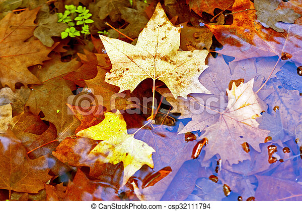 Colored autumn leaves in the water - csp32111794