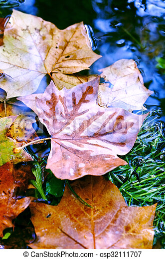 Colored autumn leaves in the water - csp32111707