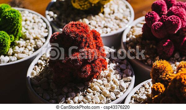 Colored cactus - csp43376220