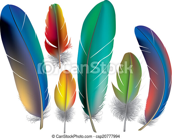 Colored feathers - csp20777994