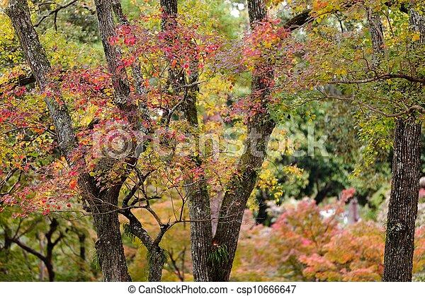 Colores japoneses de otoño - csp10666647