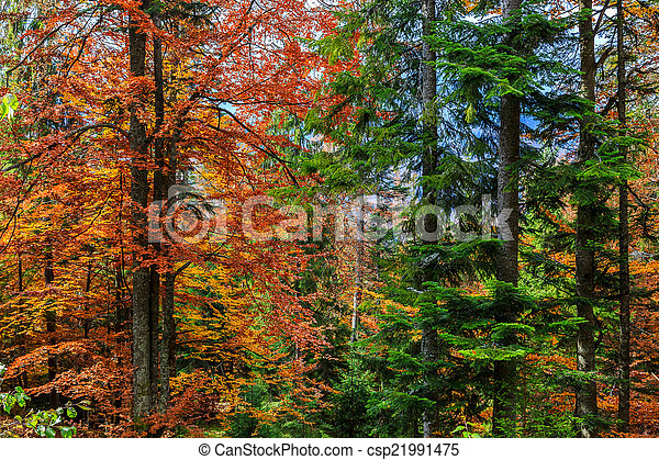 Colorful and bright autumn forest - csp21991475