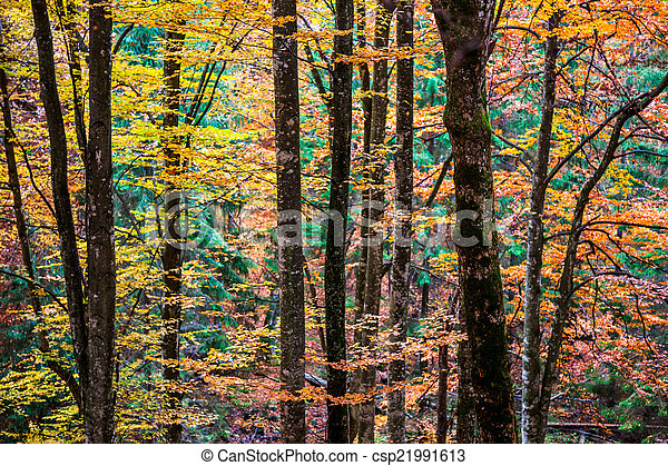 Colorful and bright autumn forest - csp21991613