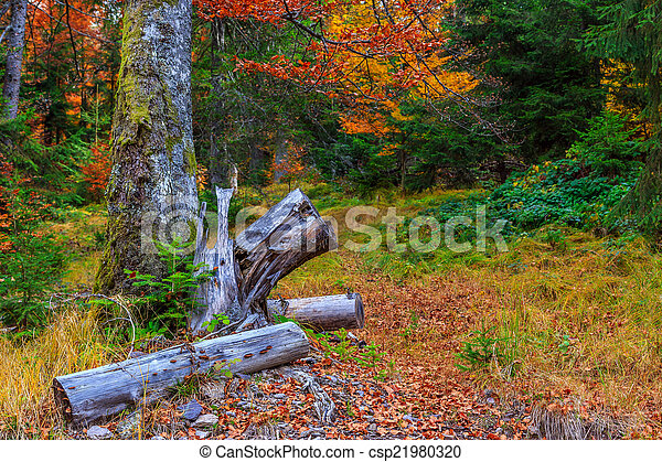 Colorful and bright autumn forest - csp21980320
