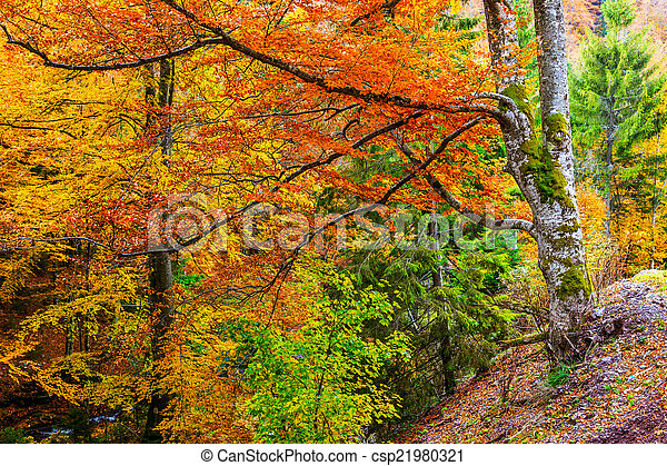 Colorful and bright autumn forest - csp21980321