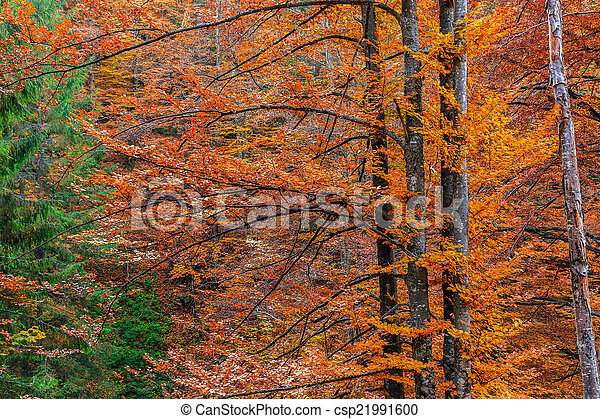 Colorful and bright autumn forest - csp21991600