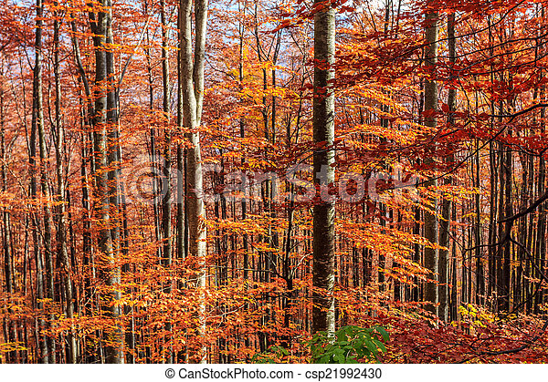 Colorful and bright autumn forest - csp21992430