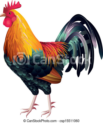 colorful and high detailed rooster photo realistic vector rh canstockphoto com clip art rooster 2017 clipart rooster crowing