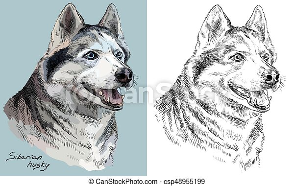 Colorful and monochrome hand drawing vector portrait of siberian husky - csp48955199