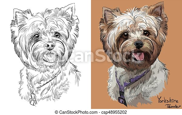 Colorful and monochrome hand drawing vector portrait of Yorkshire Terrier - csp48955202
