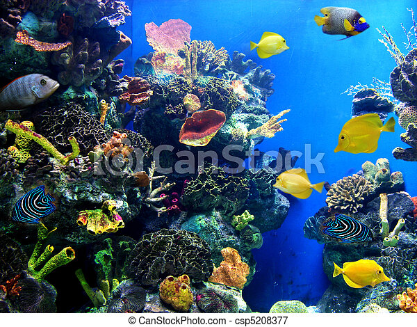 Colorful and vibrant aquarium life - csp5208377
