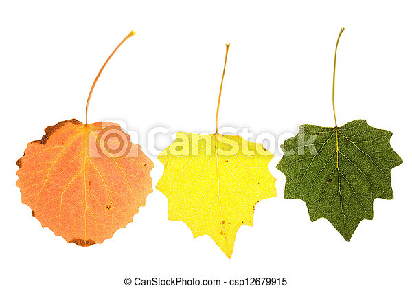 colorful aspen leaves - csp12679915