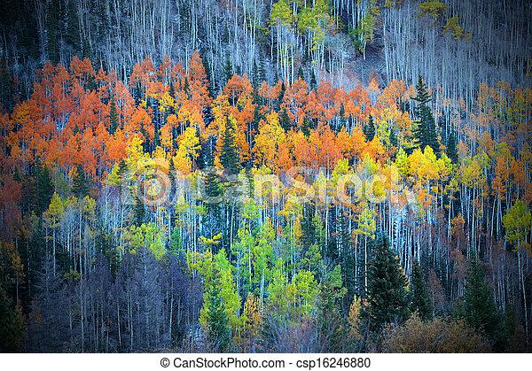 Colorful Aspens - csp16246880