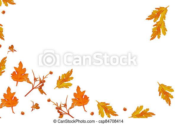 Colorful autumn flowers of chrysanthemum - csp84708414