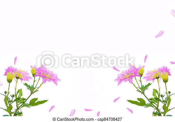 Colorful autumn flowers of chrysanthemum - csp84708427