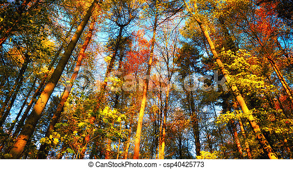 Colorful autumn forest scenery - csp40425773