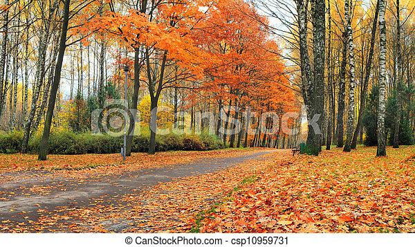 Colorful autumn landscape in the park - csp10959731