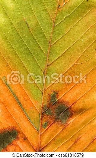 Colorful autumn leaf background. Minimal autumn concept - csp61818579