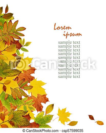 Colorful autumn leaves border - csp57599035