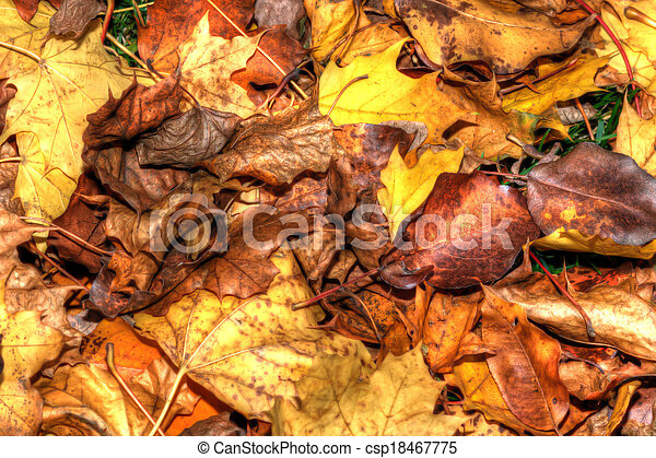 Colorful Autumn Leaves in HDR in soft focus - csp18467775